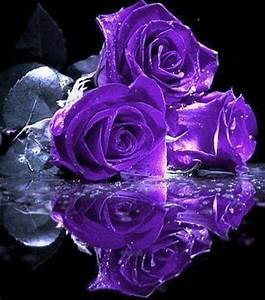 Beautiful purple roses~love roses and the color purple ...