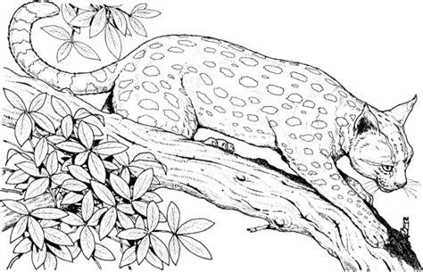Leopard Coloring Pages