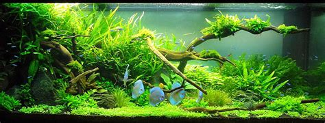 Nature Aquascape by Adrie Baumann And Aquascaping Aqua Rebell