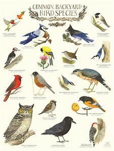 7 best BIRDS LIST NAMES images on Pinterest