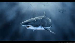 Great White Shark Art Great white shark by  Great White Shark Painting