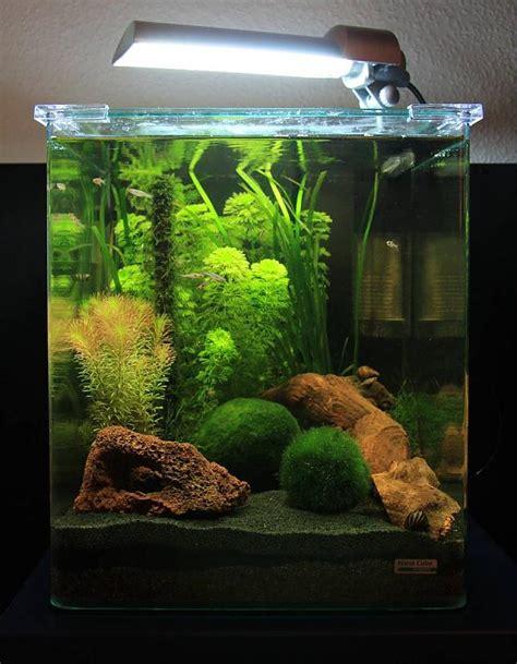 30l Nano Cube Von Dennerle  Aquarium Forum