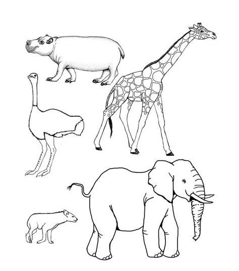 african animal template animal templates
