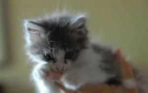 Laver Un Chaton : prison avec sursis pour un homme qui avait tu son chaton ~ Nature-et-papiers.com Idées de Décoration