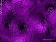 Free Purple Background Design