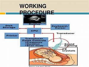 Obstetrics And Gynecology Ultrasound Diagram With Cd
