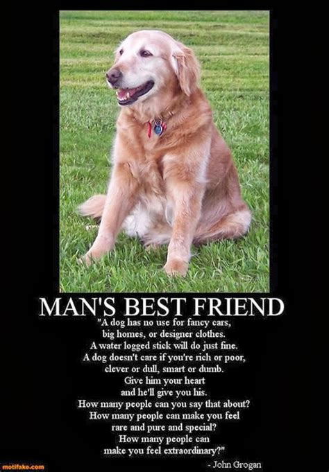 quotes    friends dogs quotesgram
