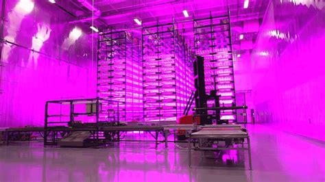 indoor farming led lights vertical farmers inc