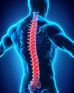 Tampa Spinal Cord Injury Attorney | Williams Law P.A.