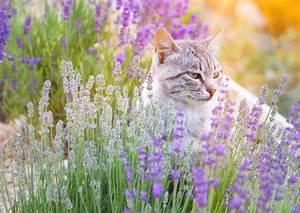 Verkleidung Für Katzen : bachbl ten f r katzen anwendung wirkung und nutzen ~ Frokenaadalensverden.com Haus und Dekorationen