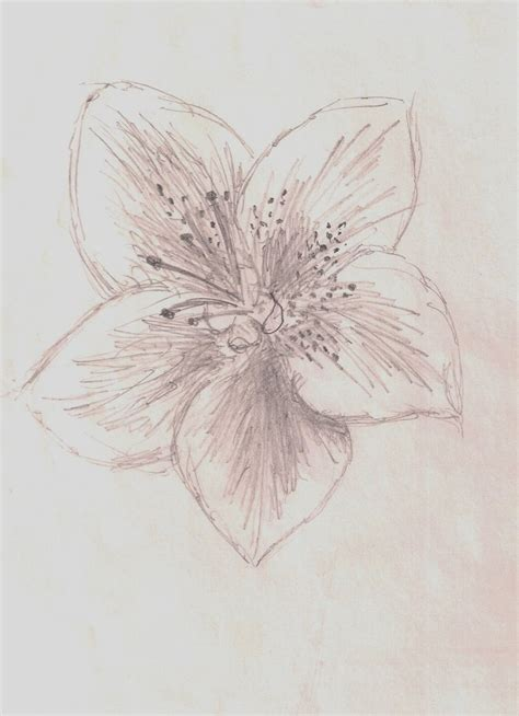 how to draw a rhododendron azalea flower by jinxyoung on deviantart
