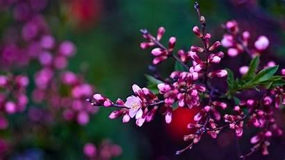 Spring Screensavers Desktop Widescreen Flowers Wallpapers Pink