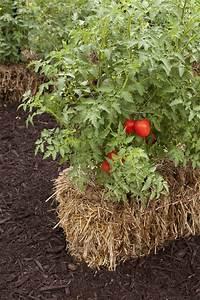 SG517 Straw Bale Gardening Part 3 Wrap Up
