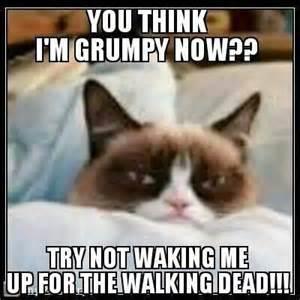 grumpy cat dead walking dead grumpy cat
