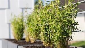 Große Pflanzkübel Winterhart : winterharte balkonpflanzen 23 lebendige vorschl ge f r ~ Michelbontemps.com Haus und Dekorationen
