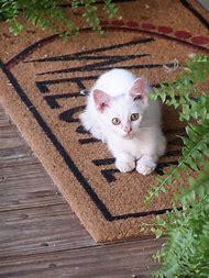 Welcome Kitty Cat Kitten