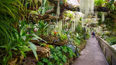 montreal botanical gardens montreal botanical garden in montreal expedia ca