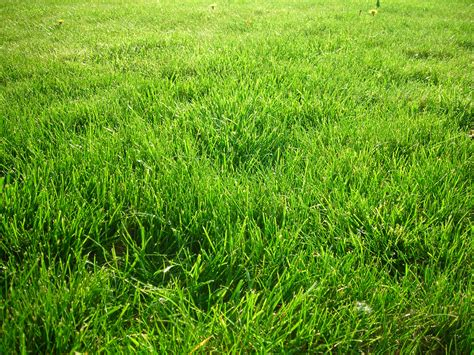 Wallpaper Wallpaper Desktop Grass