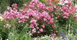 Pflanzen Bewässern Mit Plastikflasche : rosenhecke pflanzen und gestalten mein sch ner garten ~ Frokenaadalensverden.com Haus und Dekorationen
