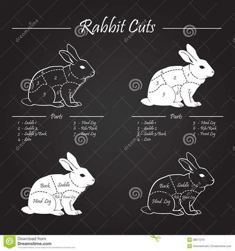 rabbit diagram cartoon vector cartoondealercom