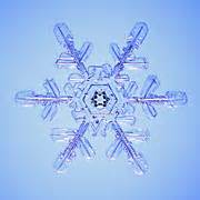 i need pictures of radial symmetry in nature can you help ...