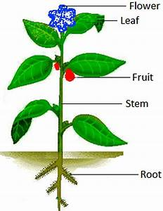 Learning The Parts Of A Plant In English Science Lesson