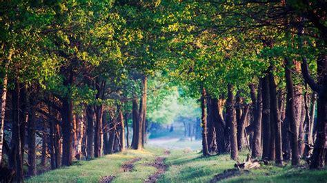 bäume schneiden im sommer die 77 besten wald hintergrundbilder