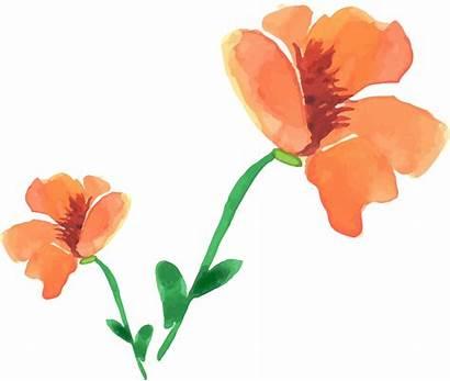 Watercolor Poppy Flower Clipart Transparent Floral Painting
