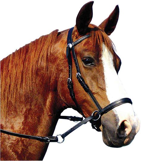 bridle bitless horse western leather bridles headstall reins headstalls types bit horses tack cook dr non larger halter flash pic