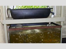 12 DIY Aquaponics System For Indoor And Backyard The