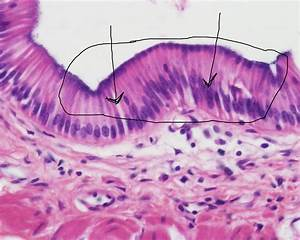 Flashcards - HISTOLOGY - Anatomy and Physiology - 4 types ...
