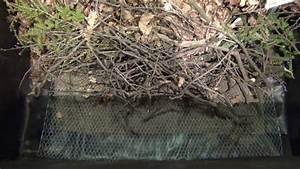 Hochbeet Befüllen Rindenmulch : hochbeet bef llen und unterschiede der hochbeete youtube ~ A.2002-acura-tl-radio.info Haus und Dekorationen