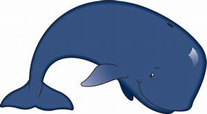 Baby Killer Whales Clipart - Clipart Suggest