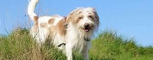 Hunde Größe Berechnen : hunderasse kromfohrl nder wesen infos zum hund ~ Themetempest.com Abrechnung