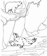 Seal Coloring Pages Animals Arctic Ledge sketch template