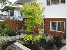 Bright Coral Bark Japanese Maple convention Vancouver
