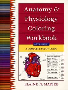 Marieb  Anatomy  U0026 Physiology Coloring Workbook  A Complete Study Guide