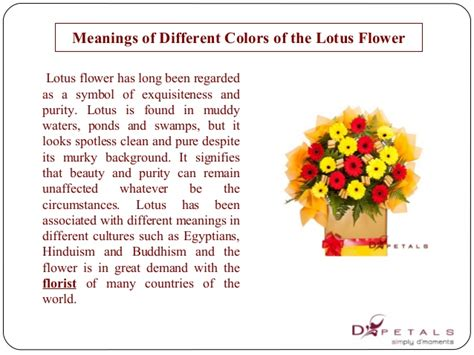 lotus flower color meanings meanings of different colors of the lotus flower