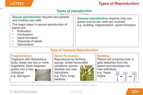 grade 4 science animal reproduction worksheet grade best