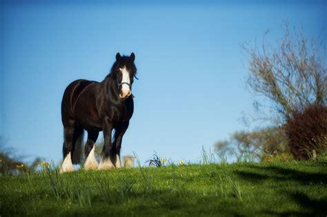 horse names most popular magic bella buzzsharer