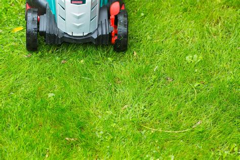 Can You Cut Wet Grass? Trimming Your Lawn During A Rainy