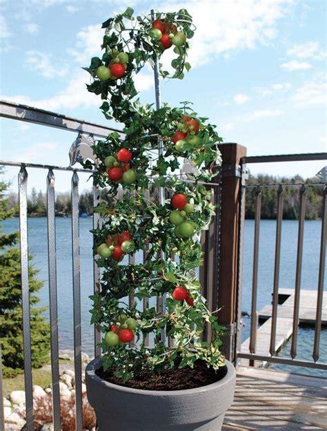 Vertical Vegetable Garden Design by 5 Vertical Vegetable Garden Ideas For Beginners