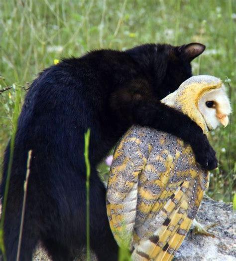 images  owl  pussycat  pinterest cats