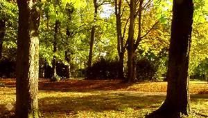 seconde pro Nature Jardin Paysage Forêt BRIACE NANTES LOIRE ATLANTIQUE
