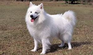 Ten Popular White Dog Breeds — Not In The Dog HouseNot In ...