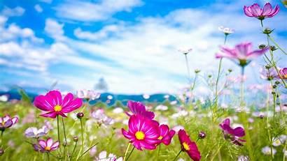 Summer Wallpapers Desktop Flowers Computer Flower Widescreen