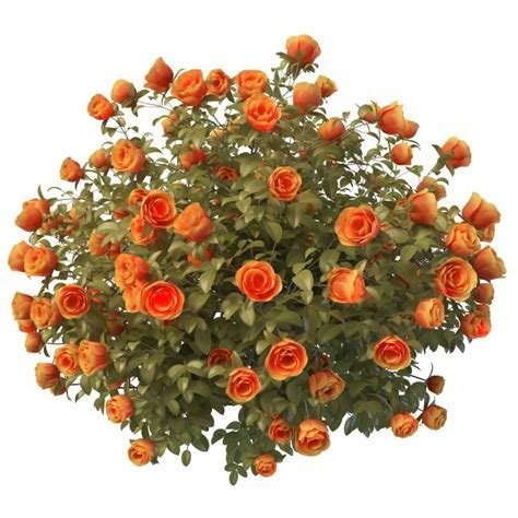 Orange rose bushes 3d model 3ds max files free download