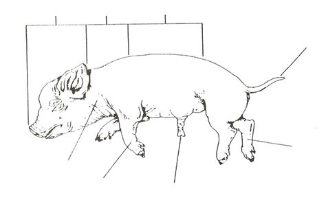 fetal pig dissection worksheet answers worksheets for all