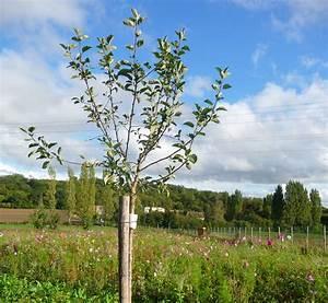 Protection Arbres Fruitiers : villevaude demain association de protection de l ~ Premium-room.com Idées de Décoration
