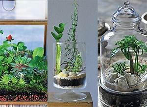 Terrarium Plante Deco : les terrariums fabriquer un contenant choisir les ~ Dode.kayakingforconservation.com Idées de Décoration